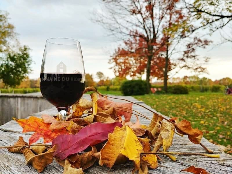 Wine glass in leaves at Domaine du Ridge.