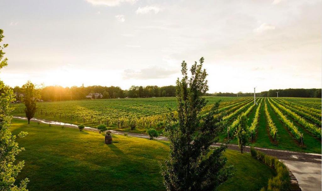 Vignoble Rivière du Chêne vineyard near Montreal.