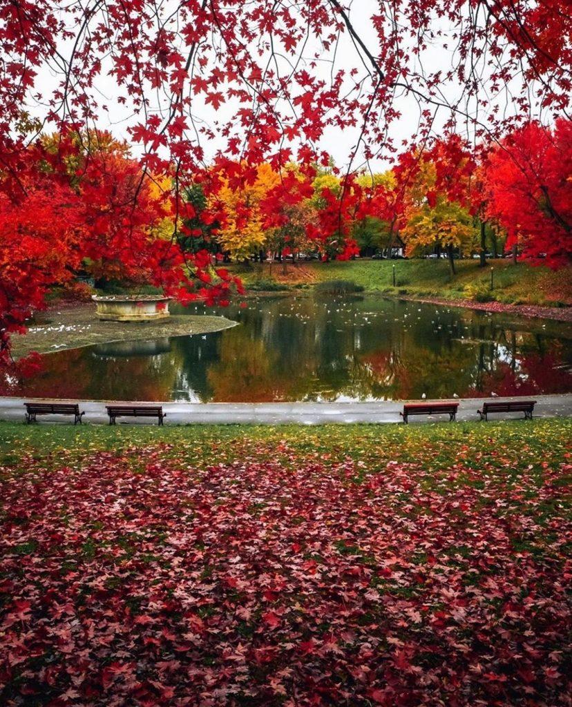 La Fontaine Park in fall.