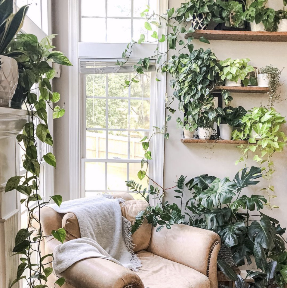 décoration hacks: plantes