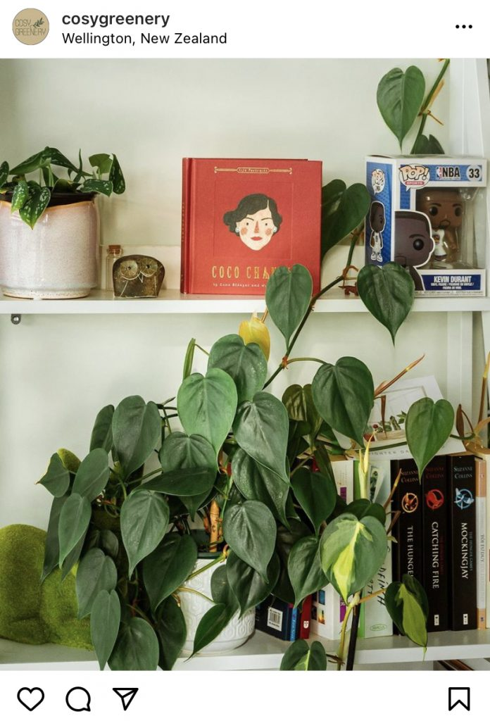heart-lead philodendron