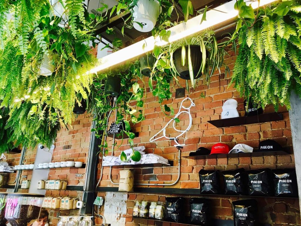 pigeon coffee shops