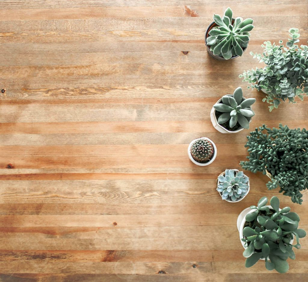 Apartment plants - decorating on a budget.